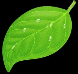 giant_leaf